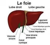 Foie psychosomatique