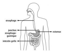 Oesophage 1